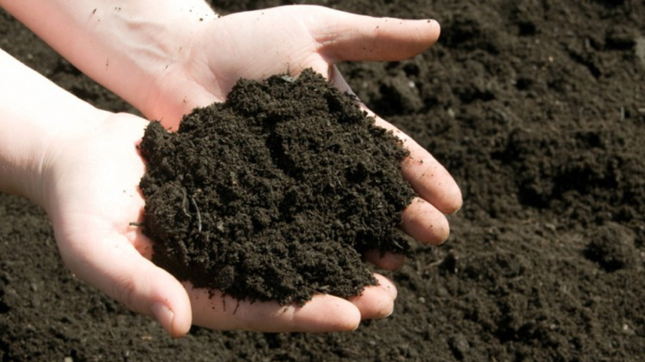 Hight content of humic and fulvic acids, primary and secondary nutrients make a soil fertile. Areapeat