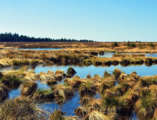 Peat and peat bogs in Latvia (Baltic state)