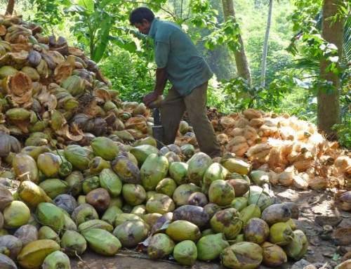 Conclusion: Coconut Coir is Not Sustainable